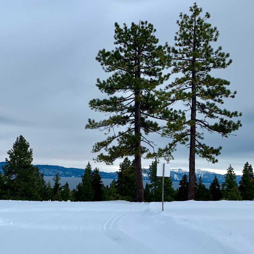 Towering trees and view of Tahoe on Silver Trail